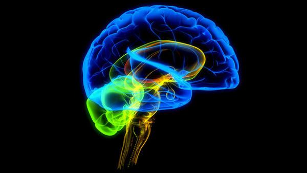 brain600thumb600x338686611